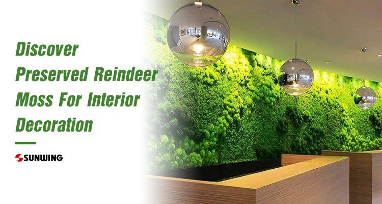 discover-reindeer-moss-for-interior-decoration