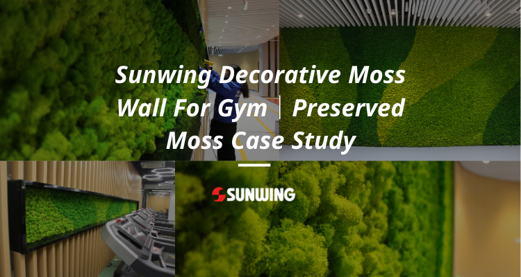 Sunwing Decorative Moss Wall For Gym|Preserved Moss Case Study